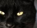 Bračni par pozvao policiju jer ih mačka drži kao taoce