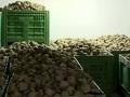 Semberija: 400 tona cvekle čeka kupca