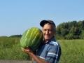 Beru lubenice na 35° i opet su srećni!