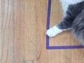 Naučnici objasnili zašto mačke ne mogu odoljeti nacrtanim kvadratima i kutijama