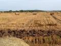 Poljoprivrednici traže 35, mlinari nude 28 feninga po kilogramu pšenice