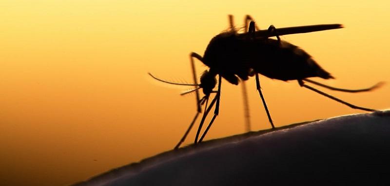 """Četiri tipa ljudi koje komarci """"najviše vole"""""""