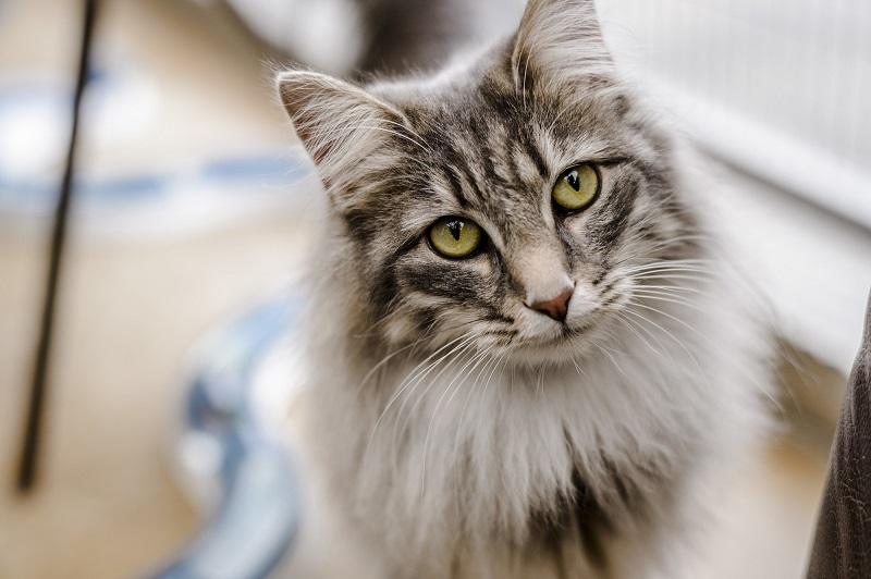 Mačak spasio porodicu od trovanja, neprestano je mjaukao dok ih nije sve probudio