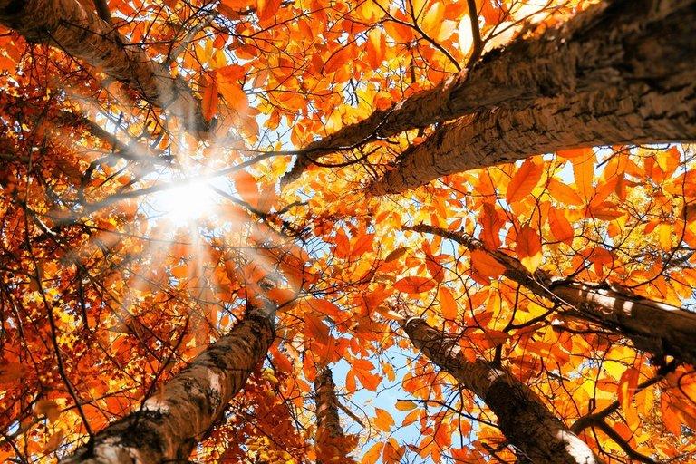 Stigla nam je jesen