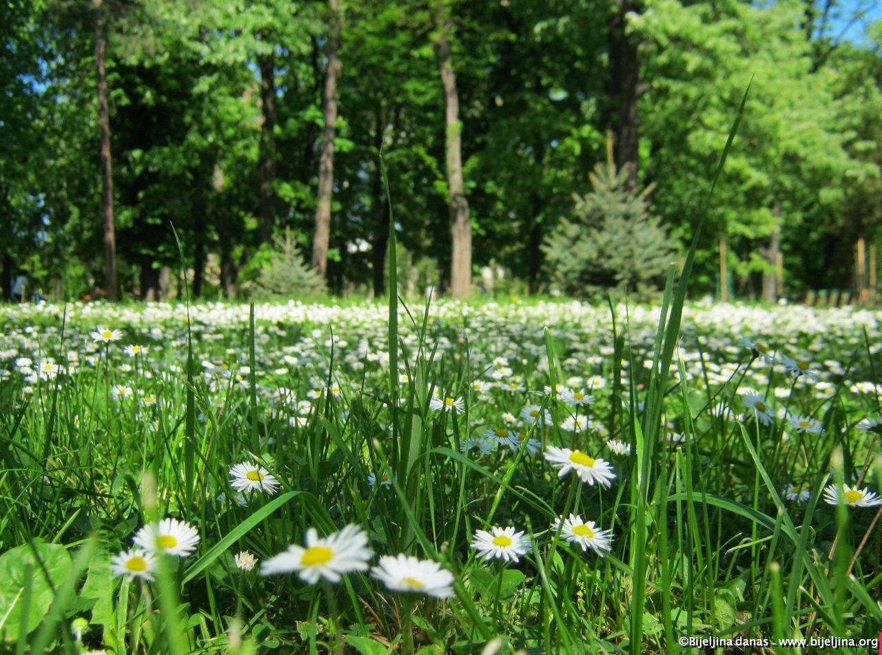 Prvi dan proljeća: Šta danas treba uraditi za sreću?
