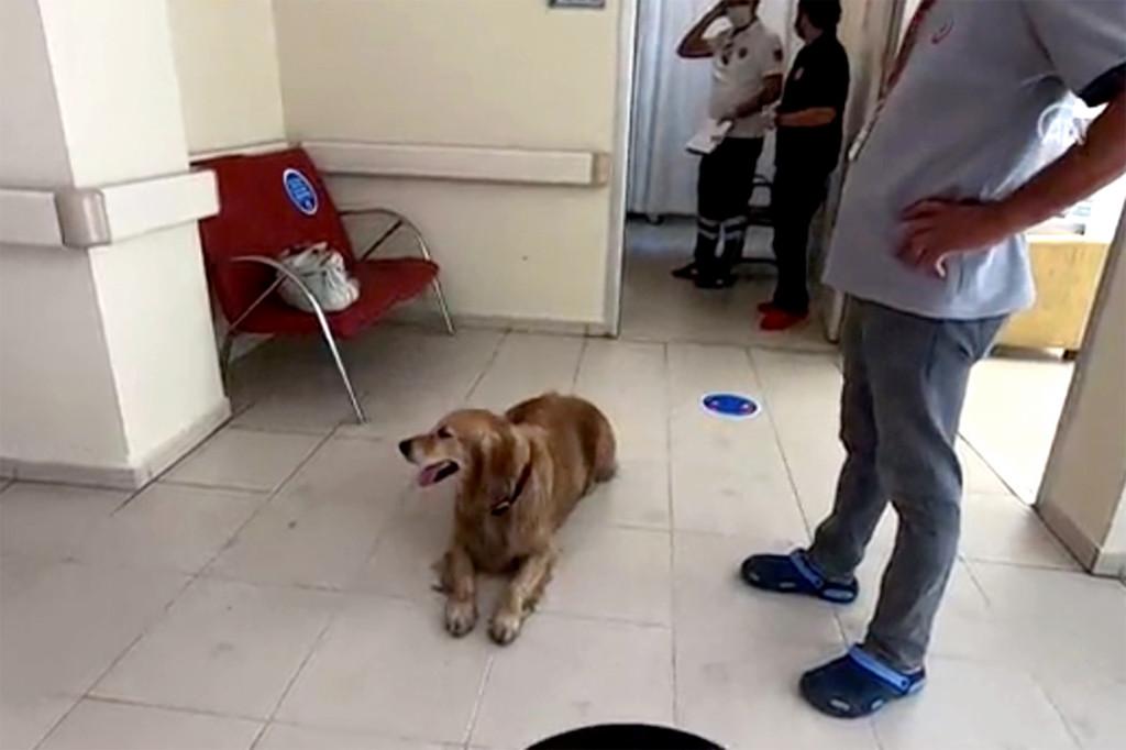 Pretrčao pola Istanbula i još jednom dokazao da je pas - čovekov najverniji prijatelj