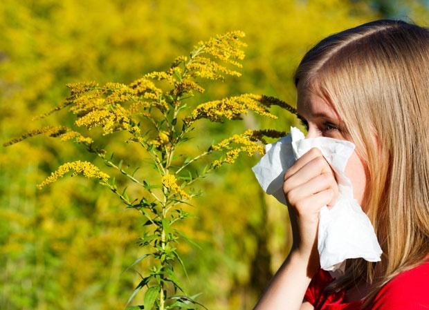 Ambrozija stvara tegobe i zdravima